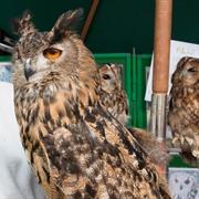 Tomar Owl Sanctuary