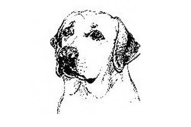 Labrador Rescue Kent